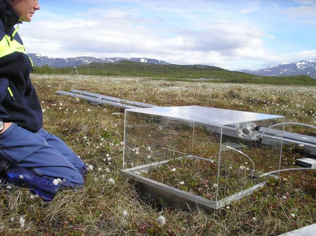 PMMA chambers used to measure methane and CO2 emissions in Storflaket peat bog near Abisko, northern Sweden. Photograph Source: Dentren – CC BY-SA 3.0
