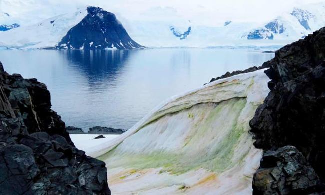 Snow algae on Anchorage Island in Antarctica. Photograph: Dr Matt Davey/University of Cambridge/SAMS/AFP via Getty Images