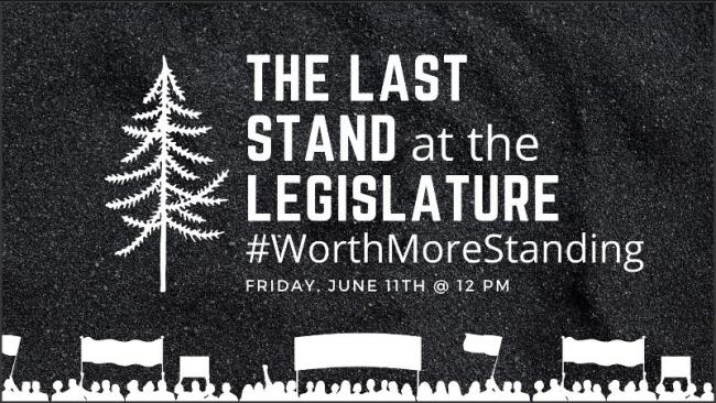 First Nations, forestry reform and old growth activists are inviting BC Premier John Horgan and cabinet to a press conference, Friday June 11