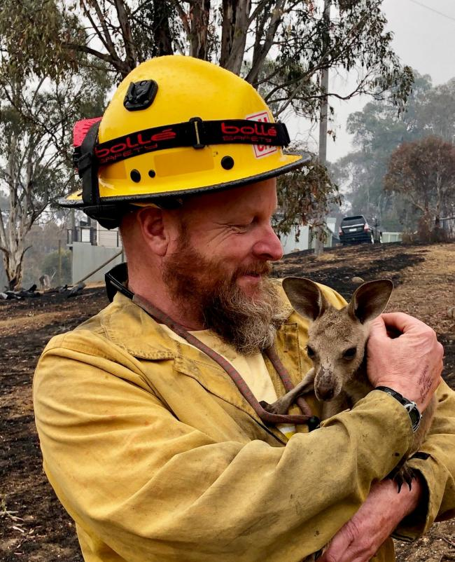 "LTBMU Fire Captain Dave Soldavini, holds a baby kangaroo, known as a ""Joey,"" that was rescued from the devastating 2019-20 wildfires in Australia, January 2020. Photo:Flickr/USDA Forest Service (CC BY 2.0)"