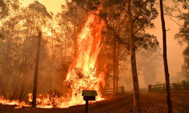 Fire going through a fence during a bushfire in Werombi, 50km south-west of Sydney. As of Saturday night, more than 100 fires were burning in NSW and more than 40 in Queensland. Photograph: Mick Tsikas/AAP