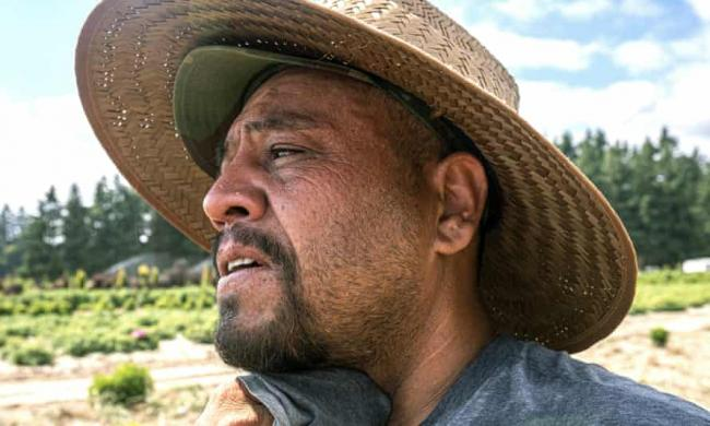 A farmworker in St Paul, Oregon, where a worker died of heat exposure last month Photograph: Nathan Howard/AP