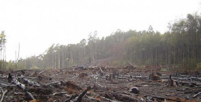 world deforestation