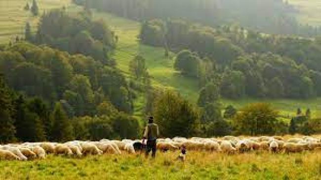 Banner image: A shepherd with grazing sheep. Image via Pixabay (Public domain).