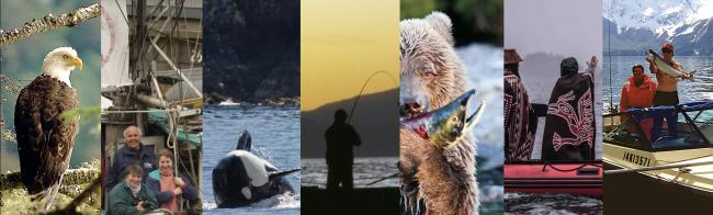 Safe Salmon website page