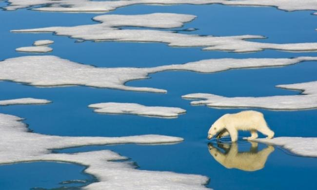 A polar bear in the arctic wilderness of the Svalbard Islands in the Arctic Ocean.