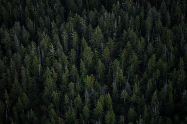 Forest - The logging industry continues to cut faster than Canada's managed forests can keep up with. Photo by: Joe Stone