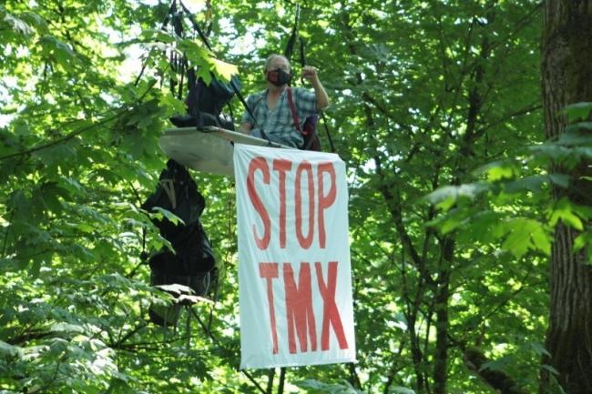 Dr. Tim Takaro took to a tree along the route of the Trans Mountain pipeline this summer to protest the project.File