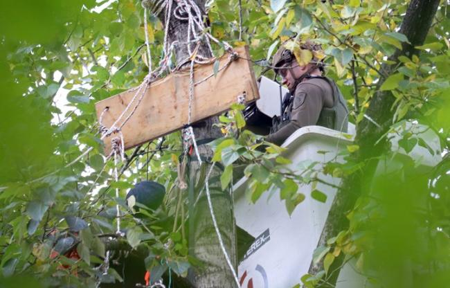 1 / 4 RCMP in Burnaby are using a lift bucket to reach Trans Mountain protesters in trees in Burnaby.Cornelia Naylor