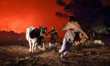 Locals fleeing with their animals as a wildfire rages in a suburb north of Athens. Photograph: Giorgos Moutafis/Reuters