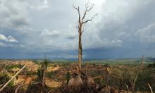 A tree stands alone in a logged area prepared for plantation near Lapok in Malaysia's Sarawak State. Photograph: Saeed Khan/AFP/Getty Images
