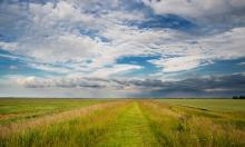 The Wash, Lincolnshire. 'Salt marshes can stash carbon 40 times faster than tropical forests.' Photograph: Michael David Murphy/Alamy