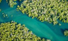 Mangroves in Morondava, west Madagascar. The UN has described coronavirus as an 'SOS signal' for humankind. Photograph: Alamy