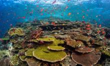 Experts have identified oceans as a key battleground in the fight to protect humanity's natural 'life support system'. Photograph: Christian Loader/Alamy