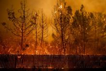 Flames climb trees as the Camp Fire tears through Paradise, Calif., on Nov. 8, 2018. Photo: Noah Berger/AP