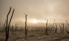 Drought - Free-Photos/Pixabay