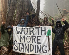 Members of one of the Fairy Creek blockade camps set out to deter old-growth logging in cut blocks on southern Vancouver Island. Photo courtesy of Fairy Creek blockade