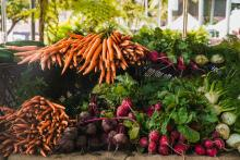 Smaller farms produce more food per acre, according to a new study from the University of British Columbia. Photo courtesy of Pexels / Wendy Wei