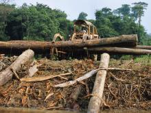 Global demand for wood is set to triple by 2050