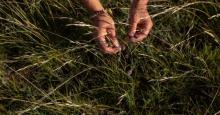 Hand in grass - Photo: Amber Bracken / The Narwhal