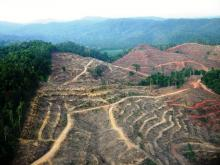 Deforestation in Sumatra, one of the world's primate hotspots ( W F Laurance )