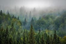 Forest - The world is still experiencing an overall loss of forests 'at a terrifying rate,' researchers say. Photo by Robert Balog / Pixabay